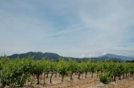 Au pied des dentelles de Montmirail et du mont Ventoux